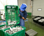 Fish_Processing - 155x128.png